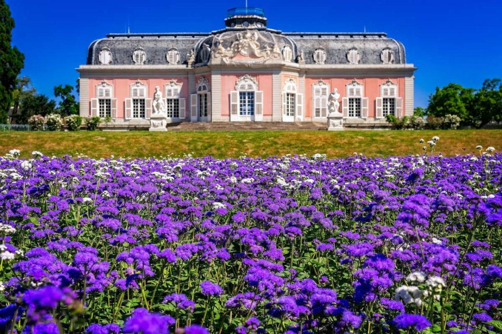 Kornblumen vor dem Schloss Benrath. Auch ein toller Ort um standesamtlich in Düsseldorf zu heiraten.