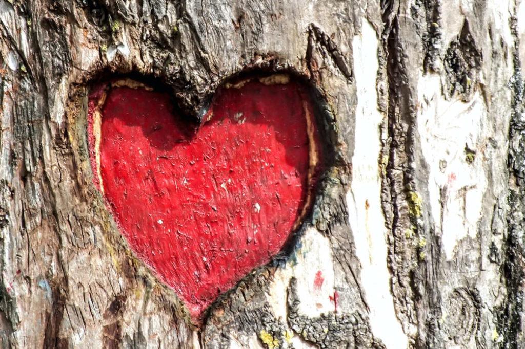 Ein Herz auf einem Baumstamm. Rot ausgemalt.