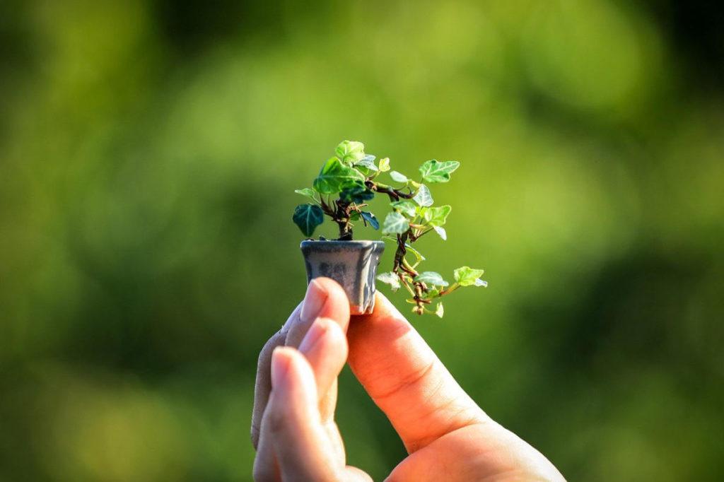Ein kleiner Baum in einem Topf wird in der Hand gehalten